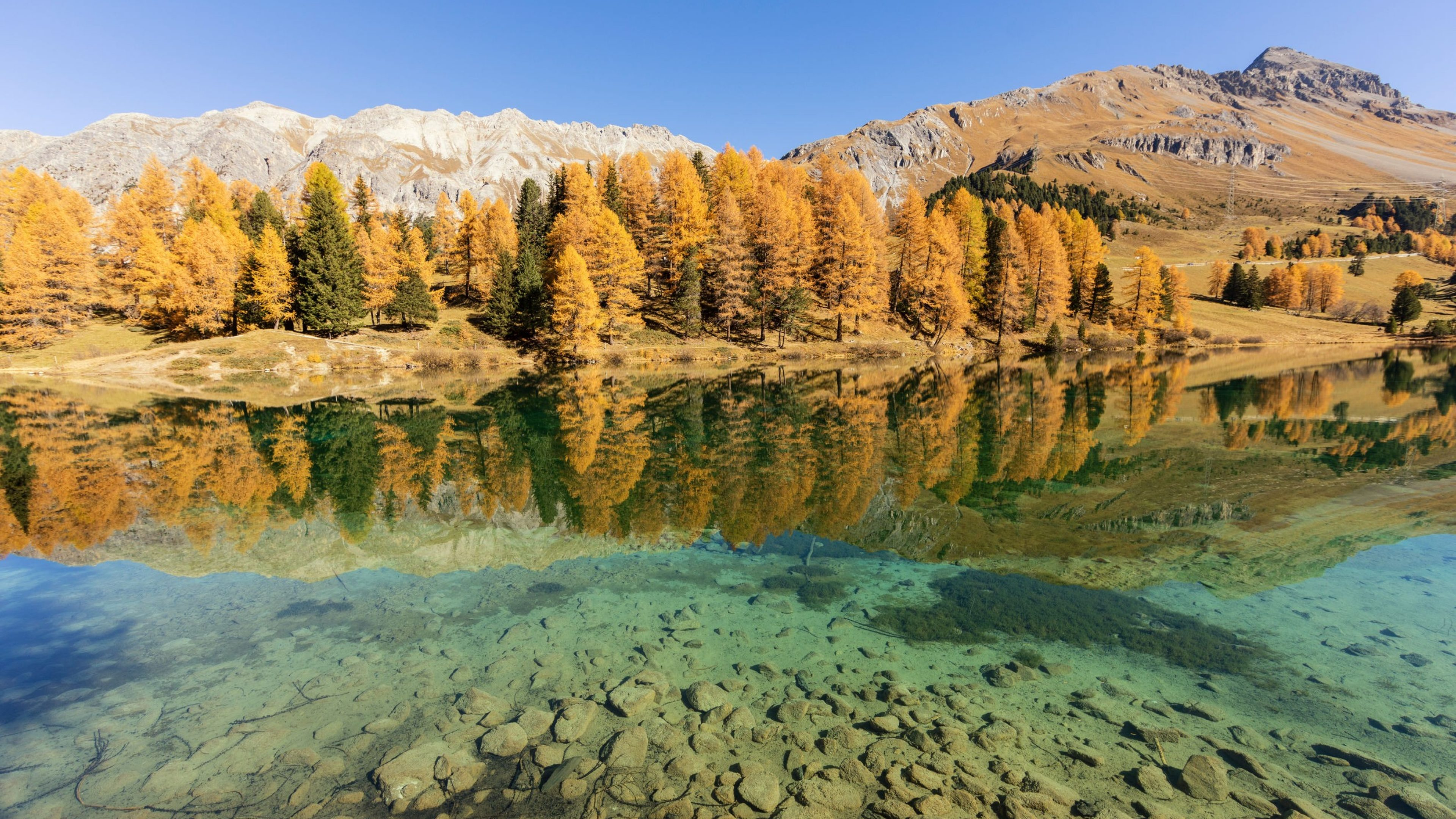 Stunning view of the Palpuogna lake near Albula pass with golden trees in autumn, Canton of Grisons, Switzerland